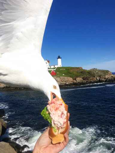 Seagull photobombs, steals woman's lobster roll