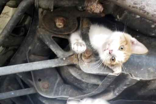 9-week-old kitten well after rescue from car's subframe