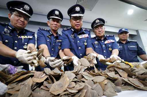 Wildlife group: Malaysia seizes record 30-ton pangolin haul