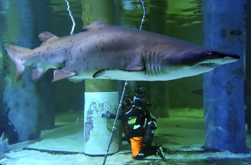 Sharks in Italy get into Christmas spirit with creche