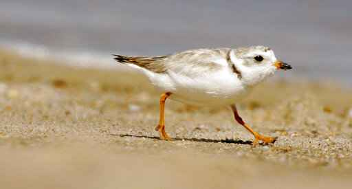 Beach concerts at Jersey shore town cancelled for the birds