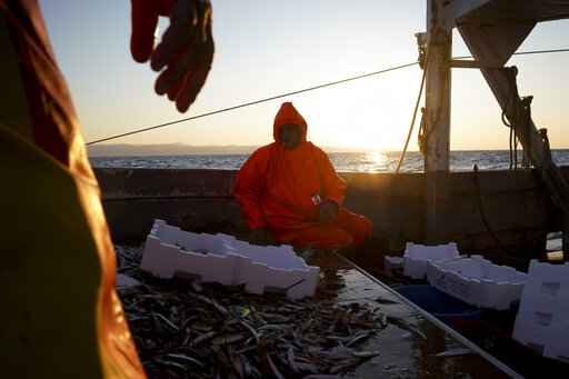 The sun rises as Francesco selects fish quality aboard Marianna, early Thursday morning, during a fishing trip in the Tyrrhenian Sea, April 2, 2020. Italy's fishermen still go out to sea at night, but not as frequently in recent weeks since demand is down amid the country's devastating coronavirus outbreak. For one night, the Associated Press followed Pasquale Di Bartolomeo and his crew consisting of his brother Francesco and another fishermen, also called Francesco, on their trawler Marianna. (AP Photo/Andrew Medichini)