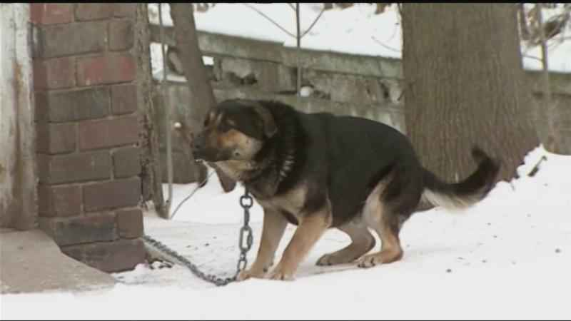 How to keep your pets safe during bitter cold weather