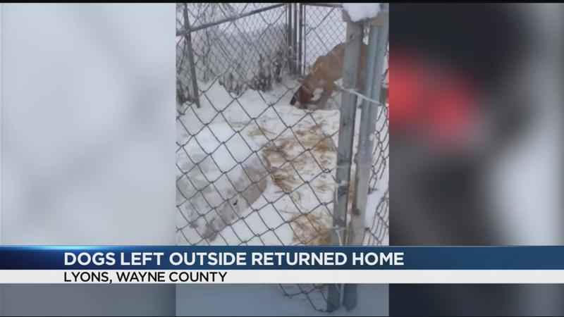 Seized dogs returned to owner in Lyons