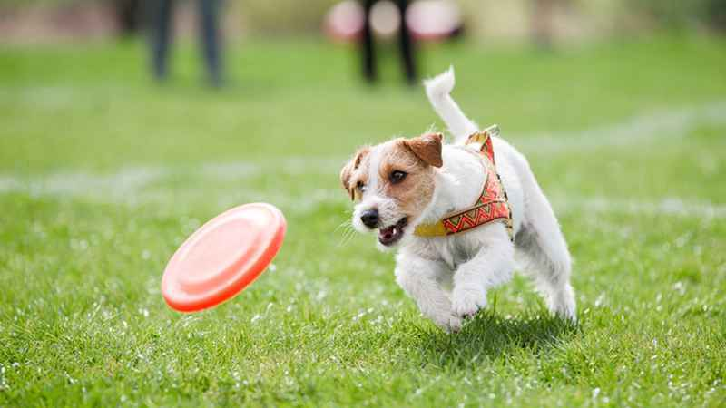 Cobbs Hill dog park to stay open after successful pilot program