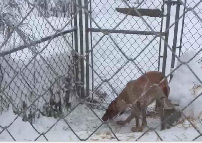 Humane Society now caring for dogs left out in cold in Lyons