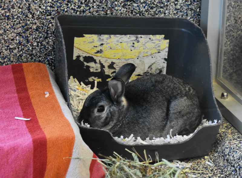 Finding new homes: Lollypop Farm helps rabbits rescued from