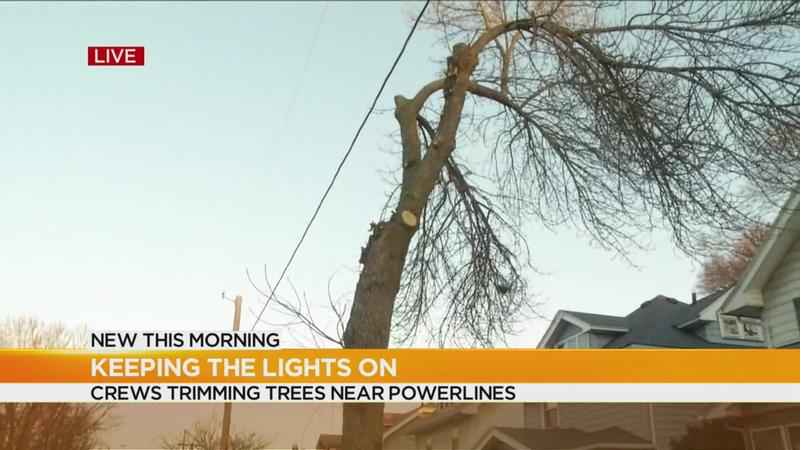 Crews trimming trees near power lines