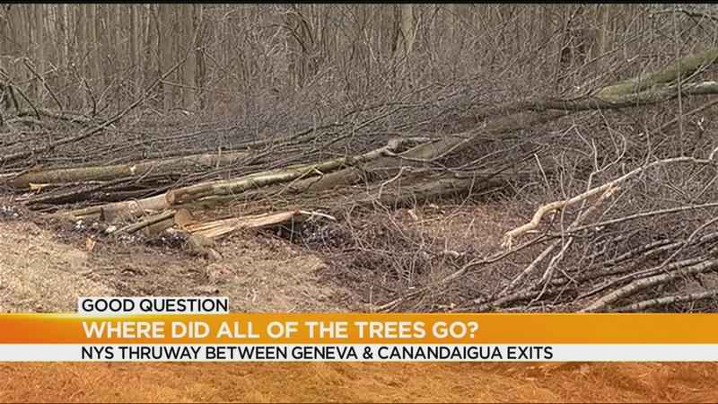 Good Question: Where did all of the trees go?