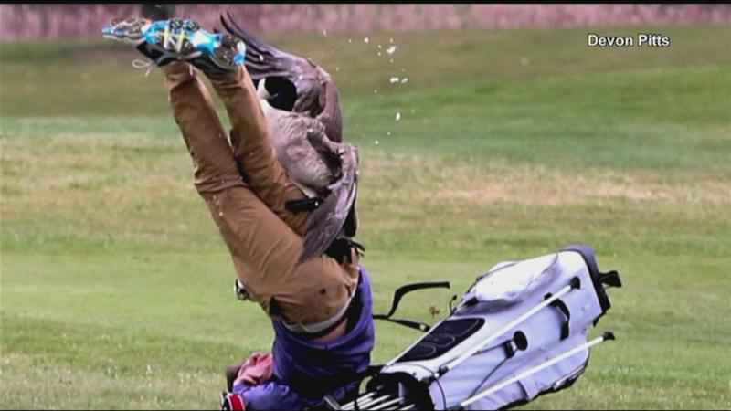 High School Golfer Attacked by Goose as Photographer Documents Entire Incident