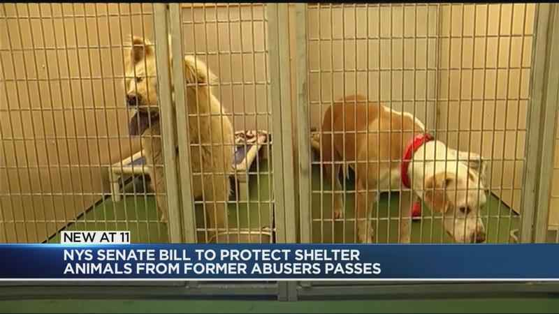 New bill to protect New York shelter animals from abusers