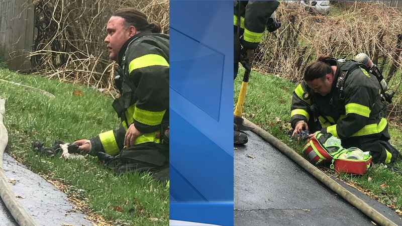 Rochester firefighters save group of kittens