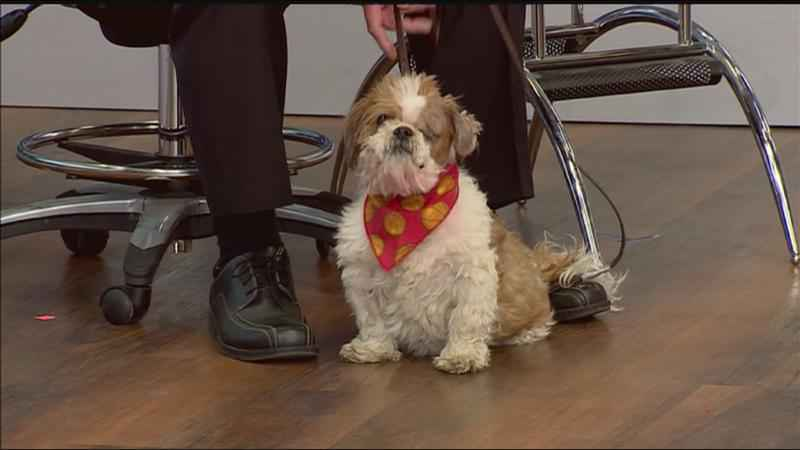 Meet Elgin!