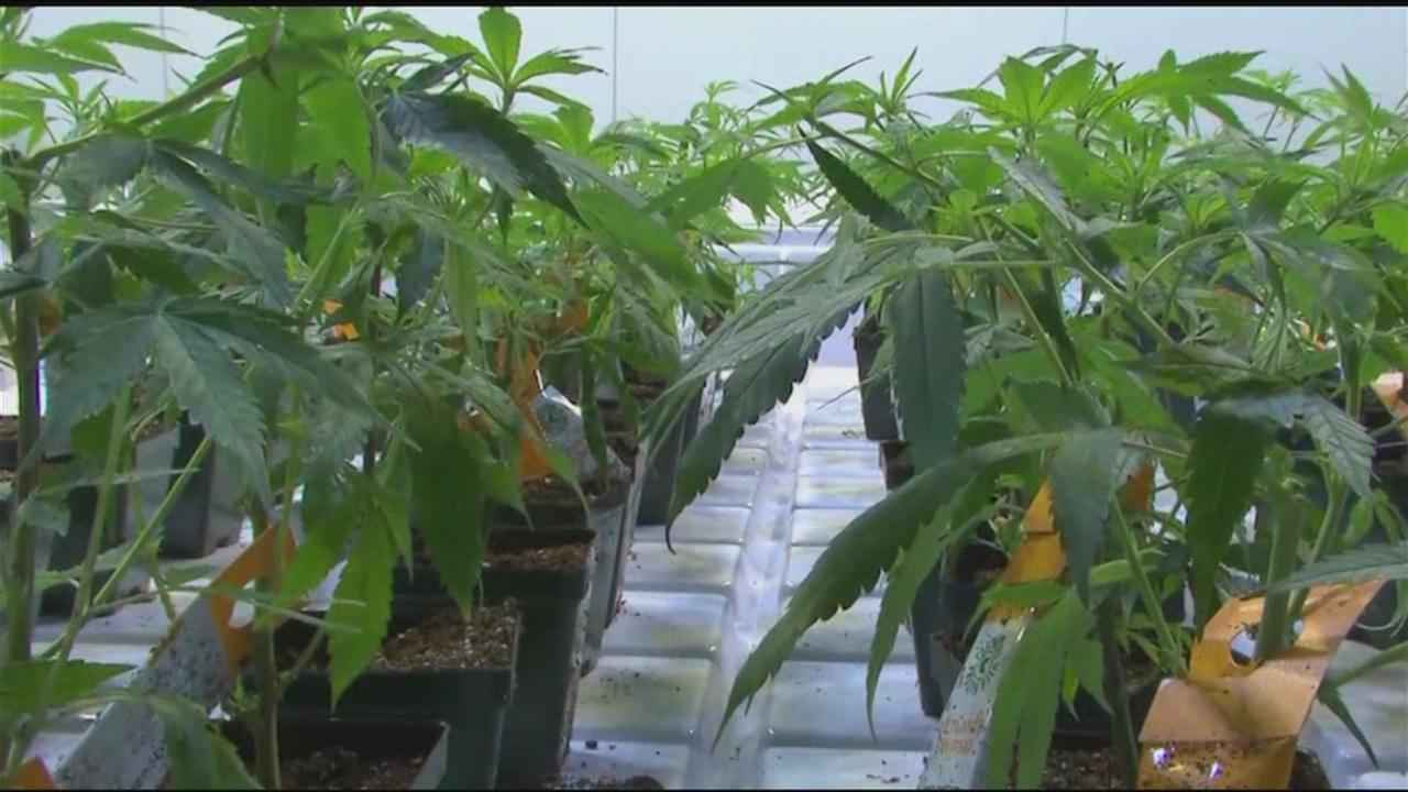 NYS moving toward legalizing recreational use of marijuana