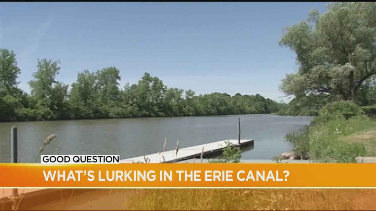 Good Question: Is the Erie Canal clean or contaminated?