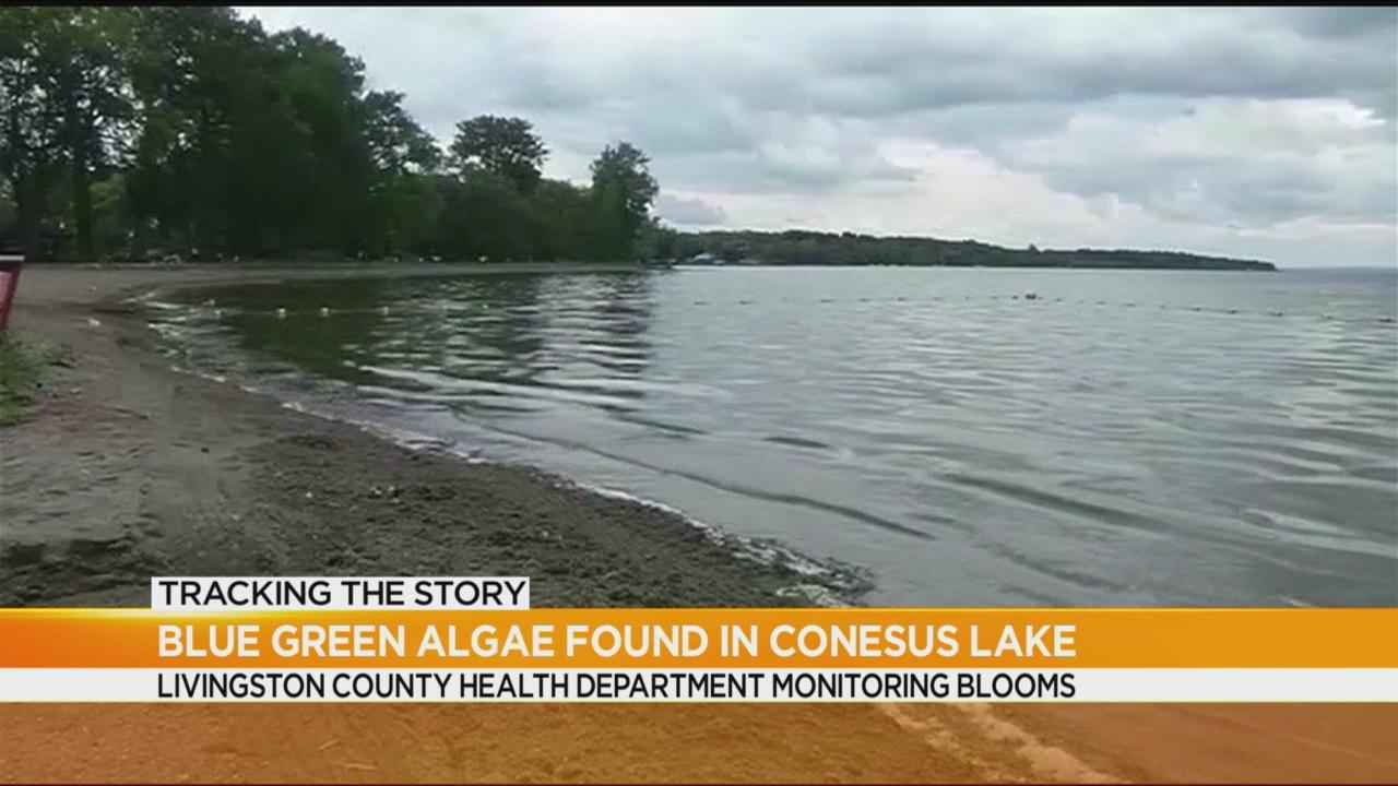 Harmful blue-green algae found in Conesus Lake