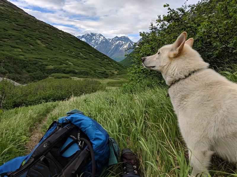 Husky rescues RIT student hiking in Alaska