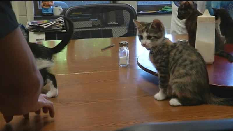 Rochester Firefighters reunite with rescued kittens