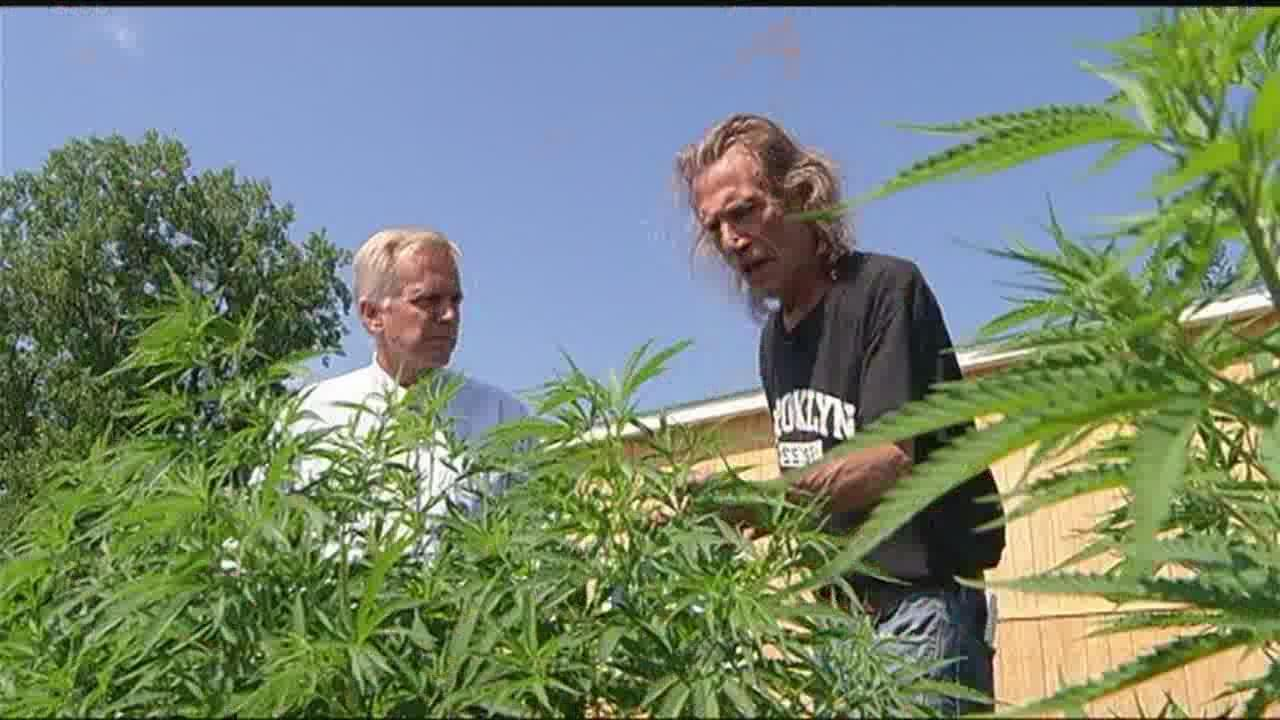 NYS Exposed: Feds rule 'hemp not pot'