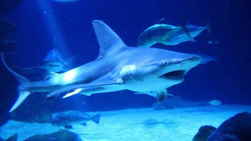 Shark attacks target children at popular NY  beaches