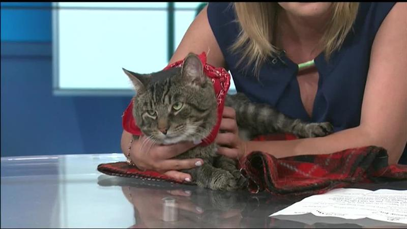 Meet Skinny Jones!