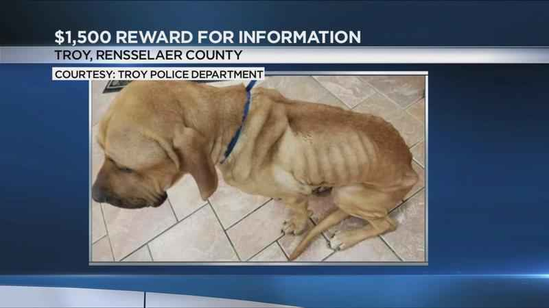 $1,500 reward for information on malnourished, abandoned dog