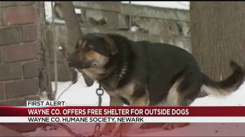 Wayne County offering free shelter for dogs out in the cold
