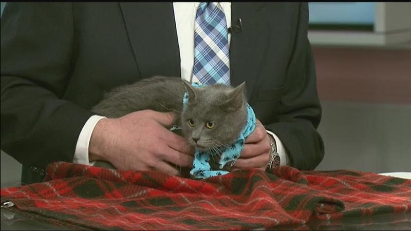 Pet of the Week: Meet Daria!