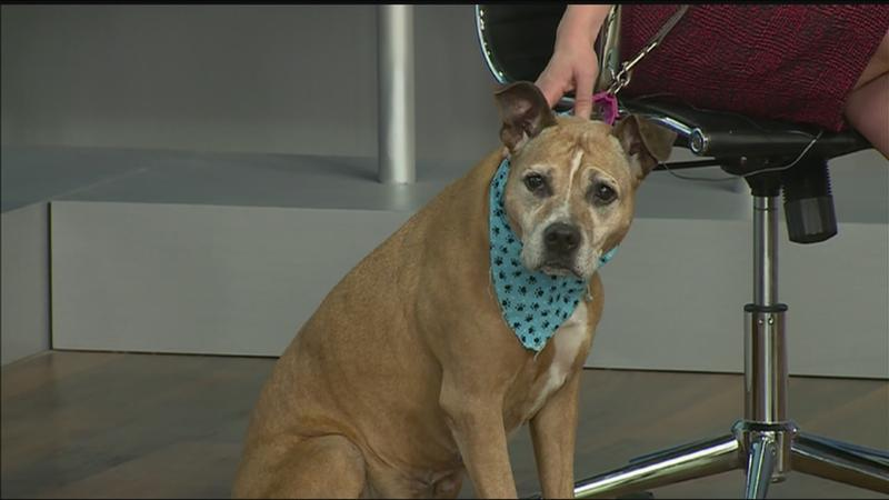 Pet of the Week: Meet Lady!