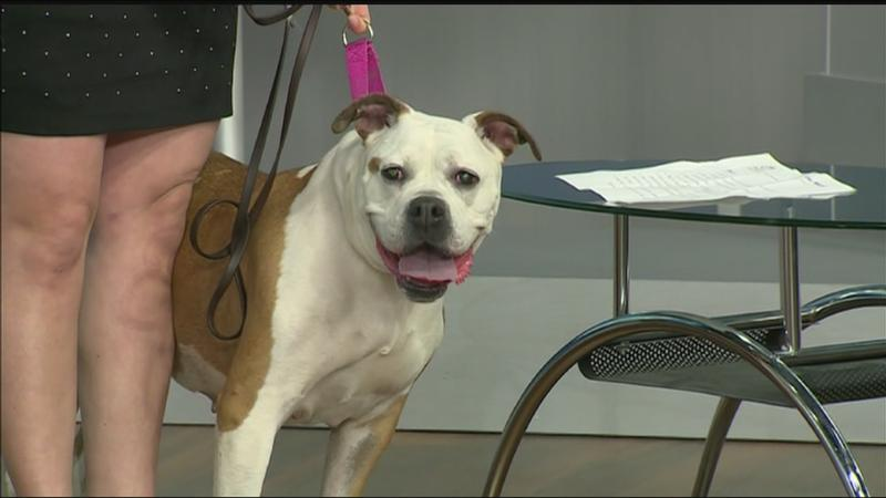 Pet of the Week: Meet Rory!