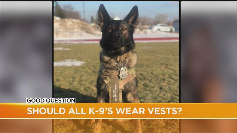 Good Question: Why aren't all K-9s wearing bulletproof vests?
