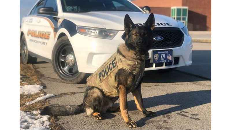 Brockport Police Department's K9 receives body armor