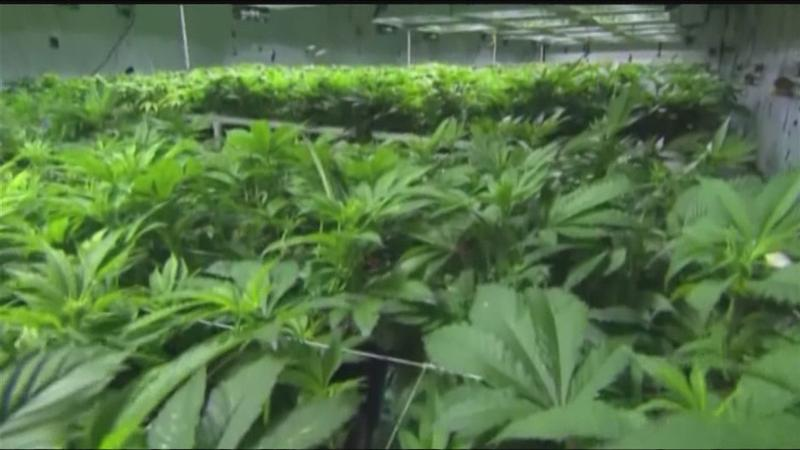 NY lawmakers set sights on marijuana decriminalization