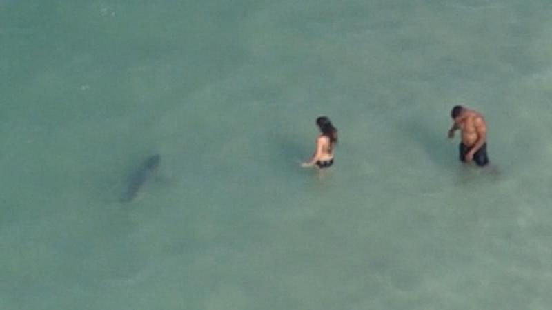 Shark Swims Near S In Daytona Beach