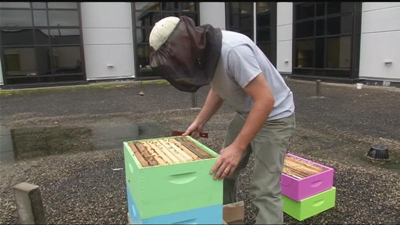 RRH expanding rooftop honey bee program