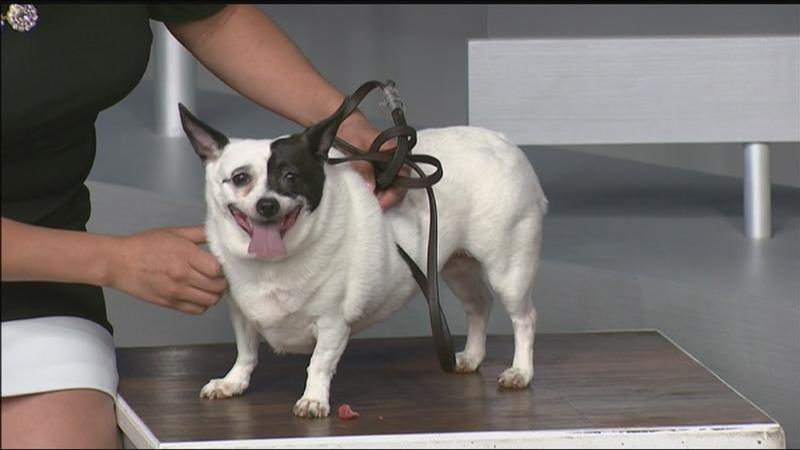Pet of the Week: Itty Bitty