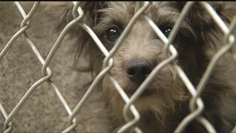Ontario County Humane Society warns of 'Naples 85' scams, as hundreds turn out to foster/adopt the dogs