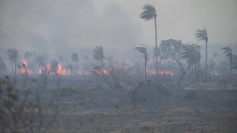 Speta: The Amazon isn't on fire- it's being burnt