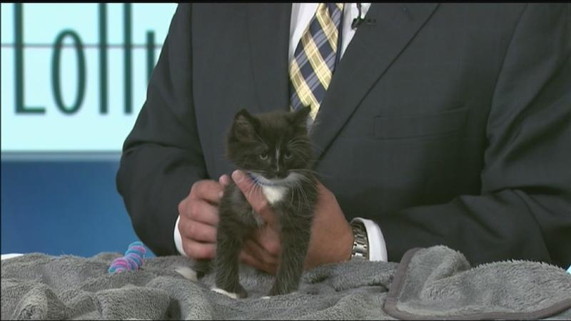 Pet of the Week: Stewie