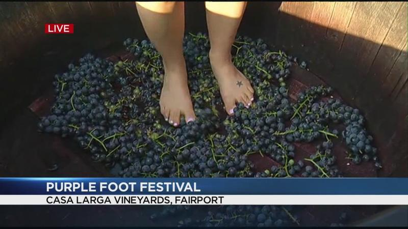 Weather looking good for grape-stomping at Casa Larga