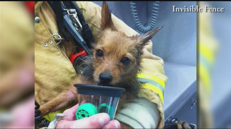 Local fire departments using special masks to save pets