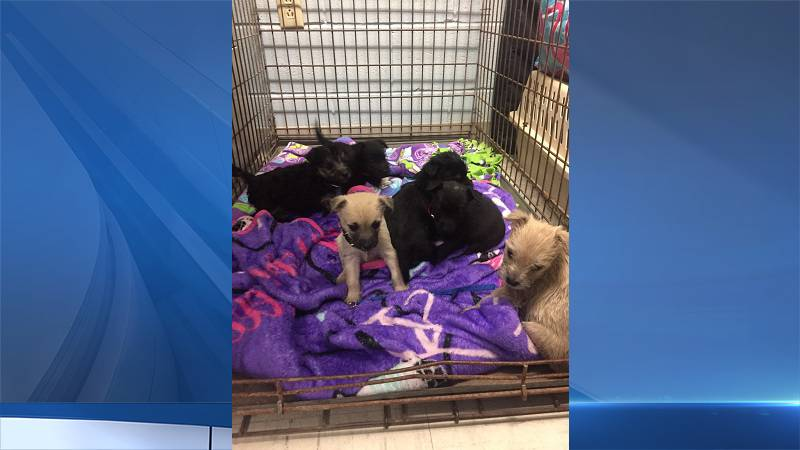 Puppies from 'Naples 85' seized in new animal cruelty arrest