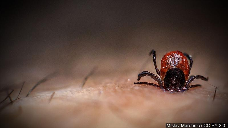 CDC Lyme disease research funding to increase by $2 million