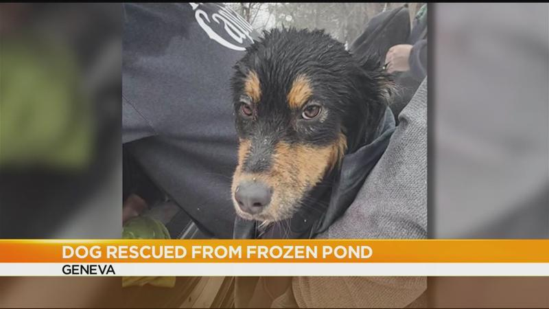 Dog rescued from icy pond along Rt. 14 in Geneva