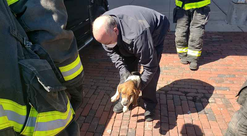 RFD, Lollypop Farm save beagle trapped under owner's truck