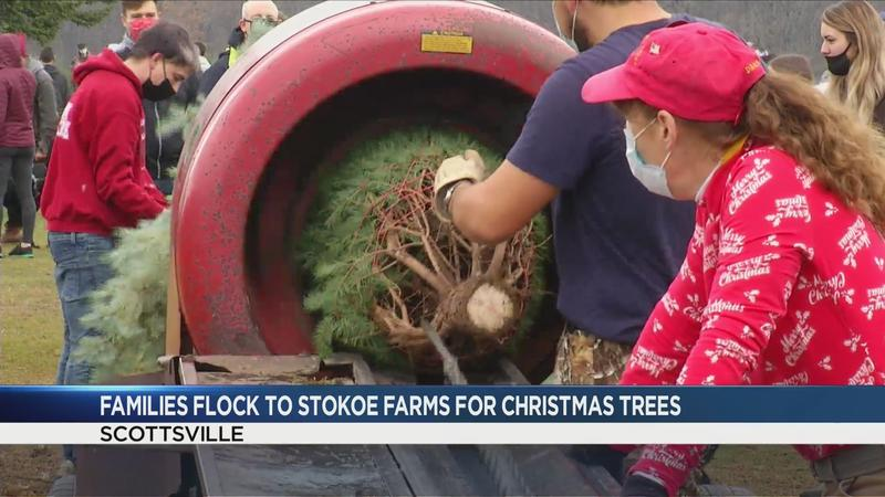 Families head to Stokoe Farms for Christmas trees