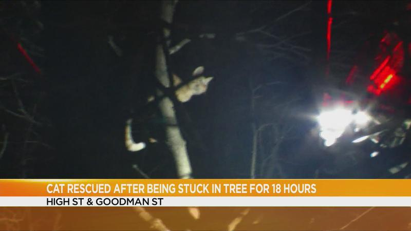 Rochester cat spends Thanksgiving stuck in a tree for 18 hours, its owner has to be rescued, too