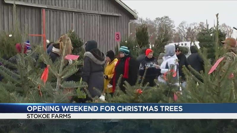 Stokoe Farms encouraging families to make Christmas tree reservations