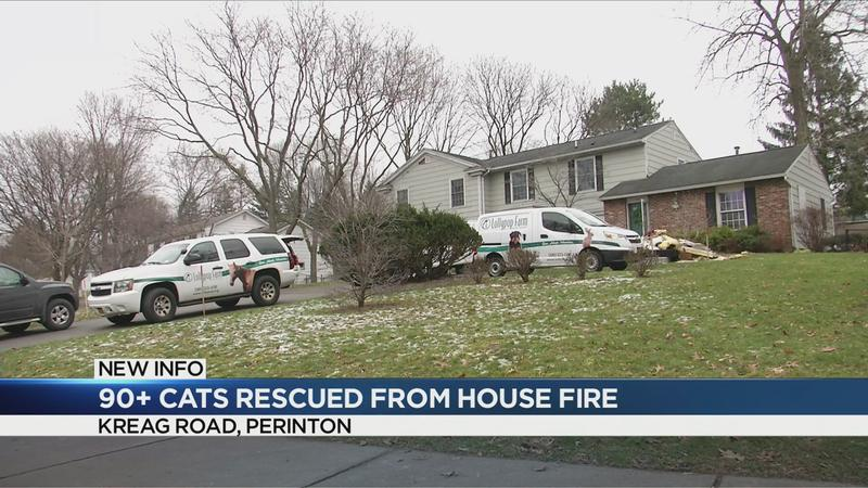 At least 90 cats rescued from Perinton house fire