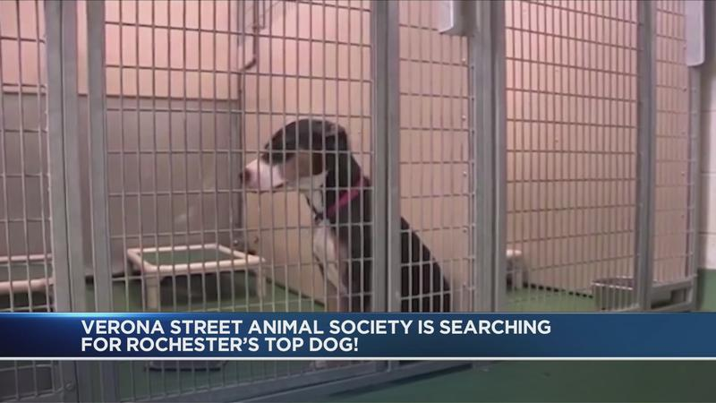 Help determine Rochester's 'Top Dog'